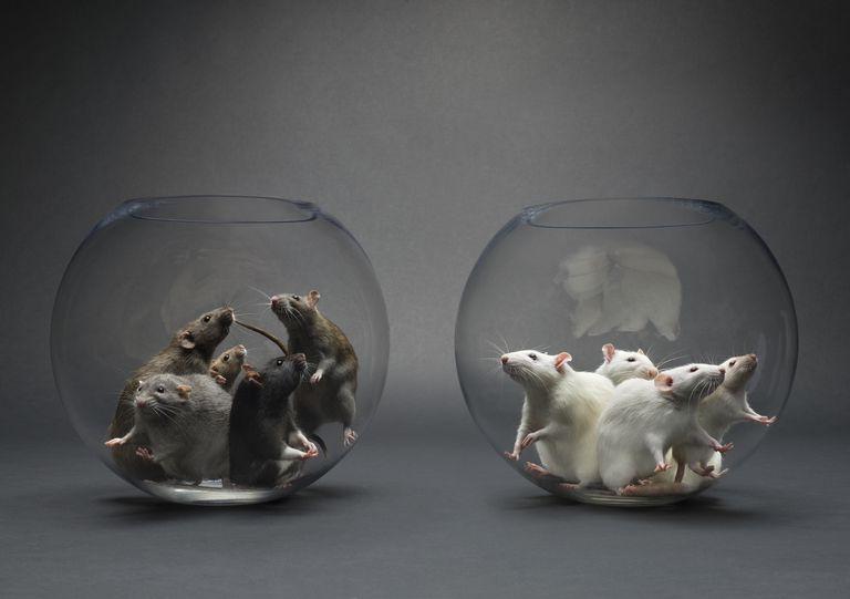 Black White Mice in Bowls