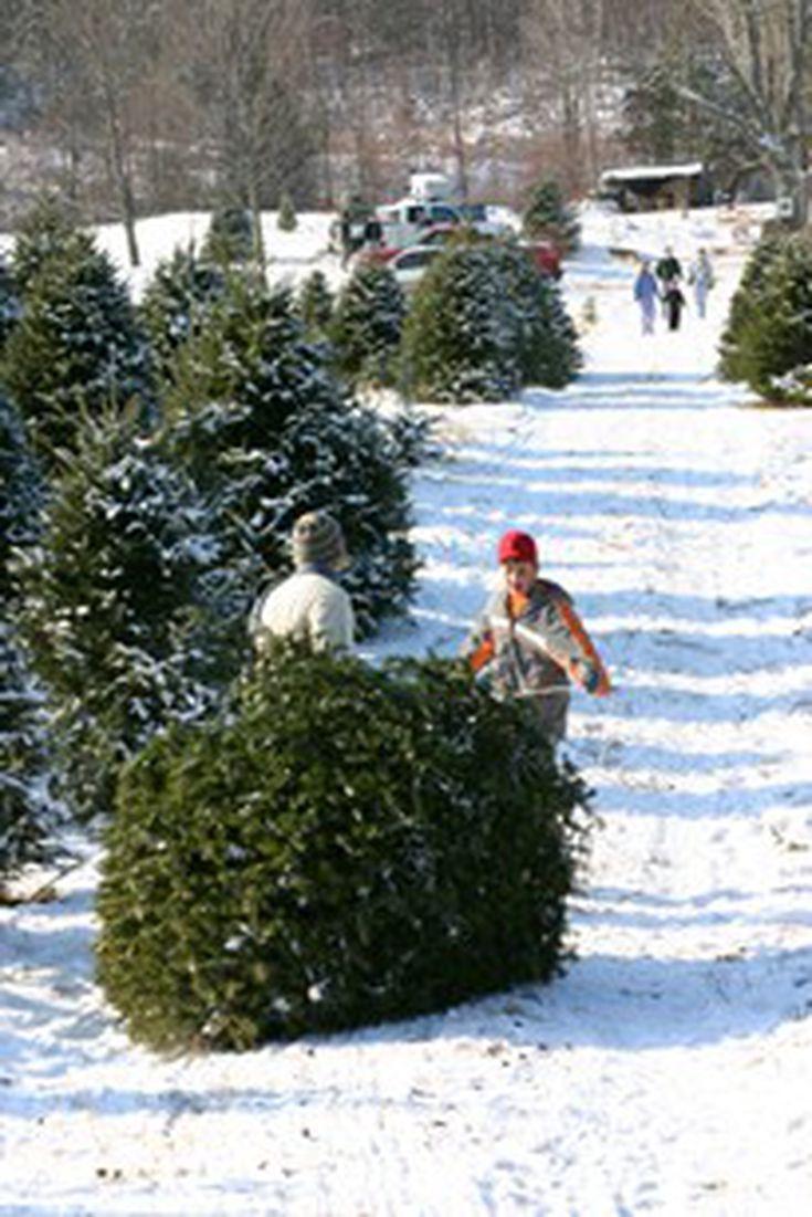 where to get your christmas tree this season - Christmas Tree Farms