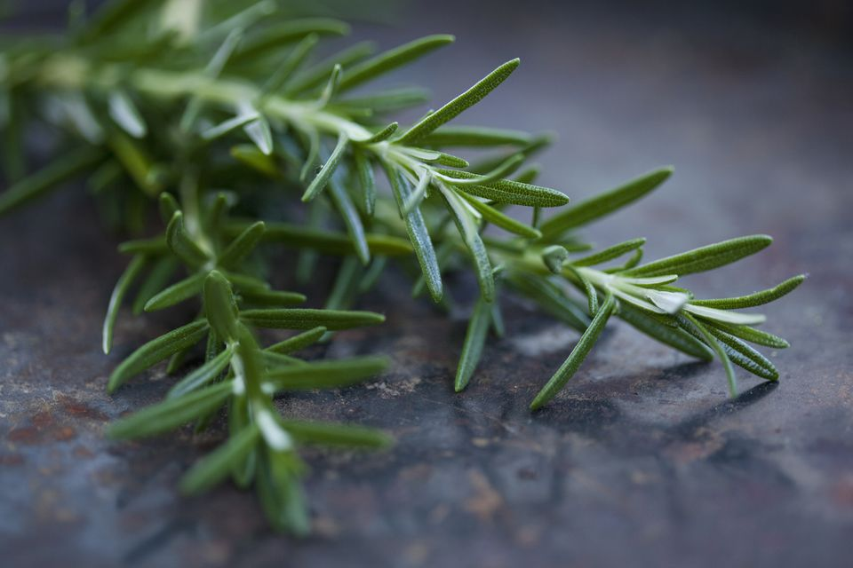 Close up of rosemary leaves