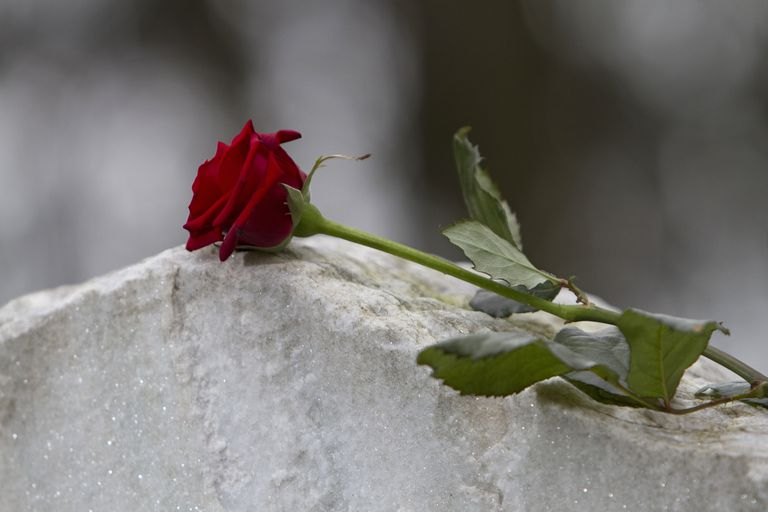 red long stem rose laying on tombstone