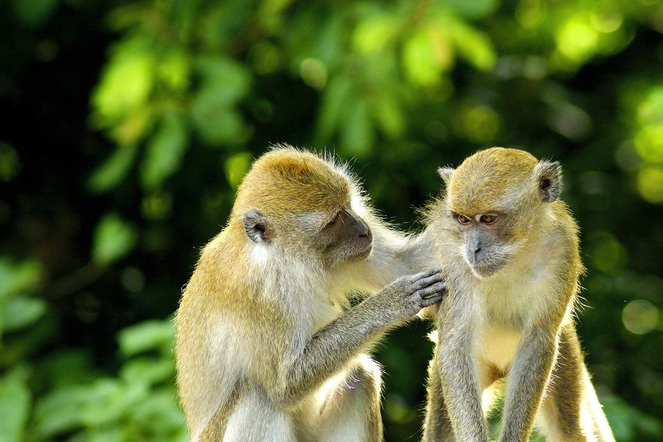 two monkeys socializing