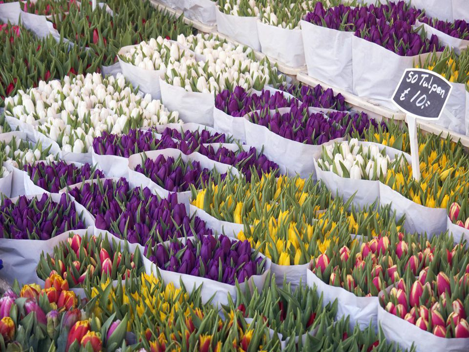 Tulips for sale in the Amsterdam flower market