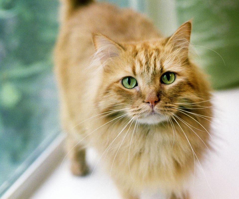 A close-up of a cat