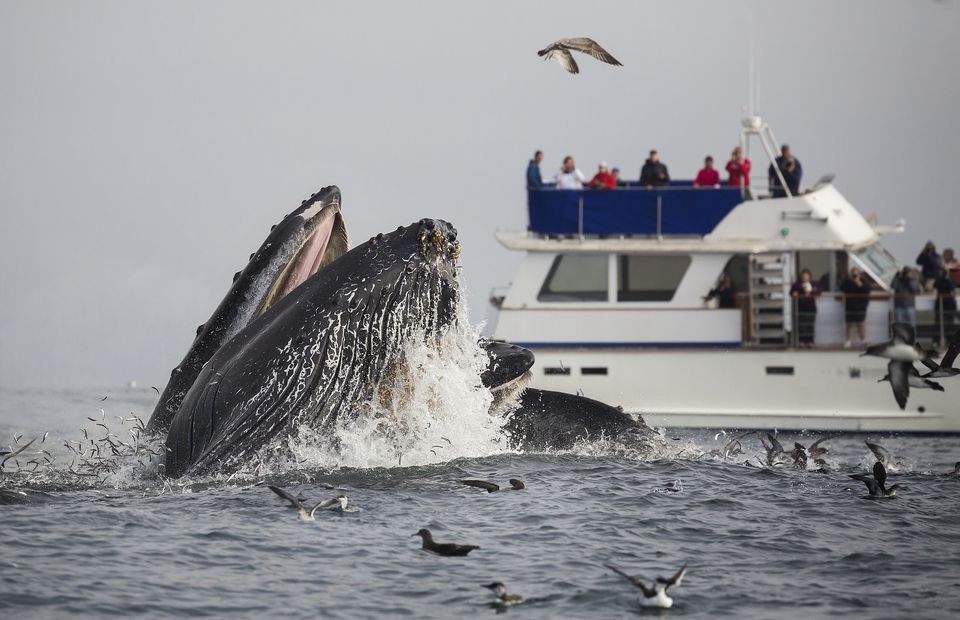Whale Watching Near Monterey
