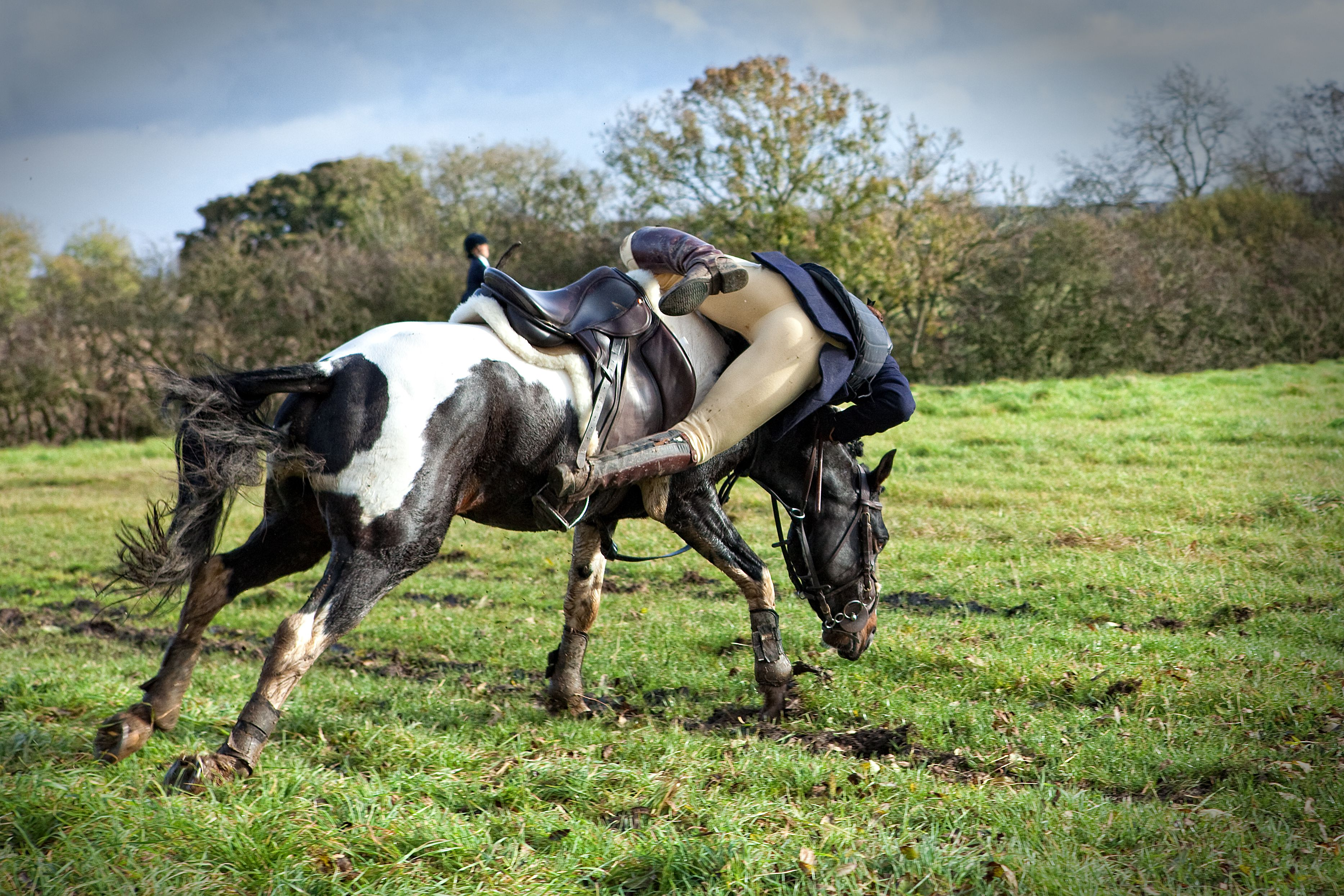 What to do when someone falls off a horse for Thoroughbred tattoo lookup