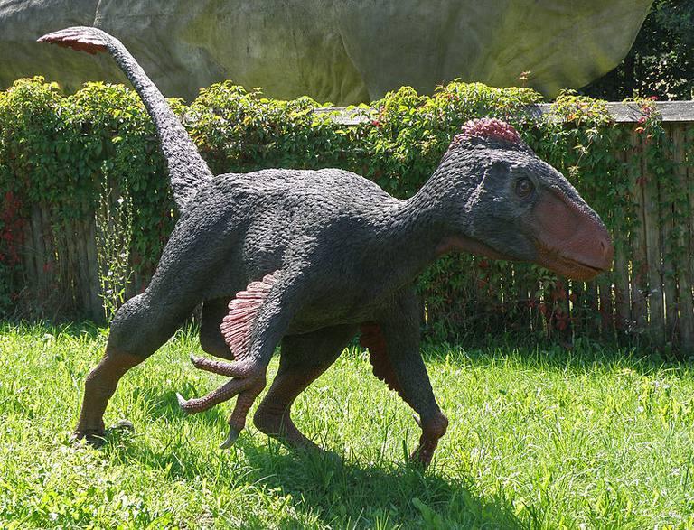 10 facts about utahraptor the worlds biggest raptor