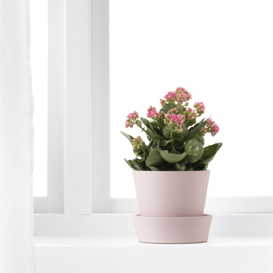 small millennial pink planter