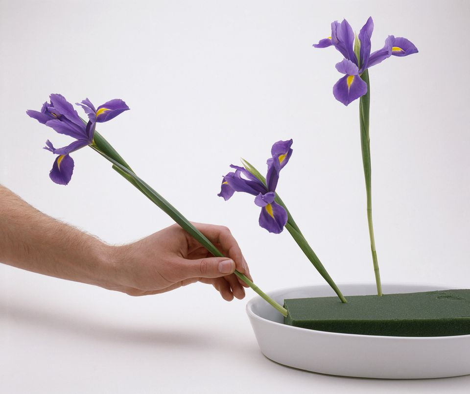 irises in floral foam