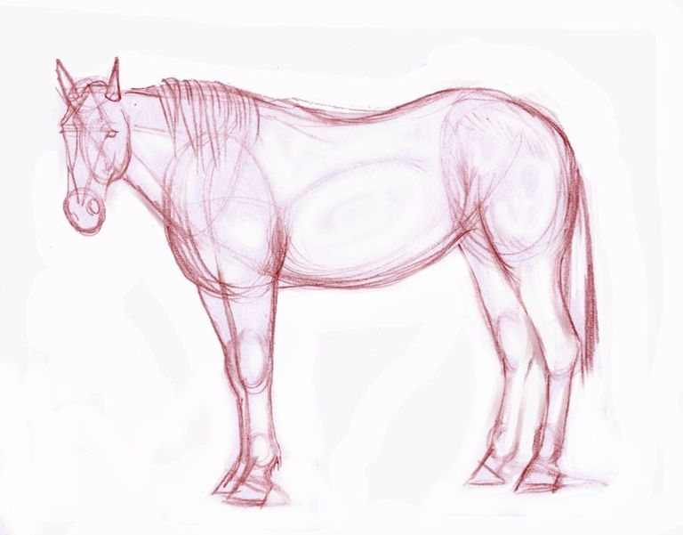 Drawing lesson a realistic horse in colored pencil horse drawing outline ccuart Images