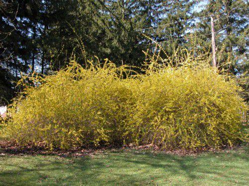 When to Prune Flowering Trees & Shrubs