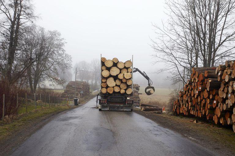 Tree trunks loading on truck