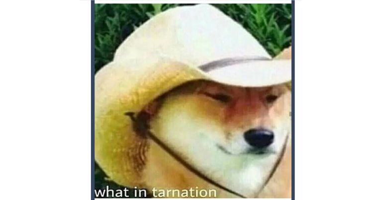 Shiba Inu wearing a cowboy hat with text, what in tarnation?
