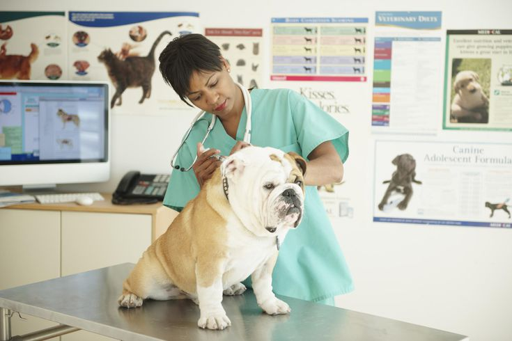 Veterinarian Job Description  Learn About Being A Vet