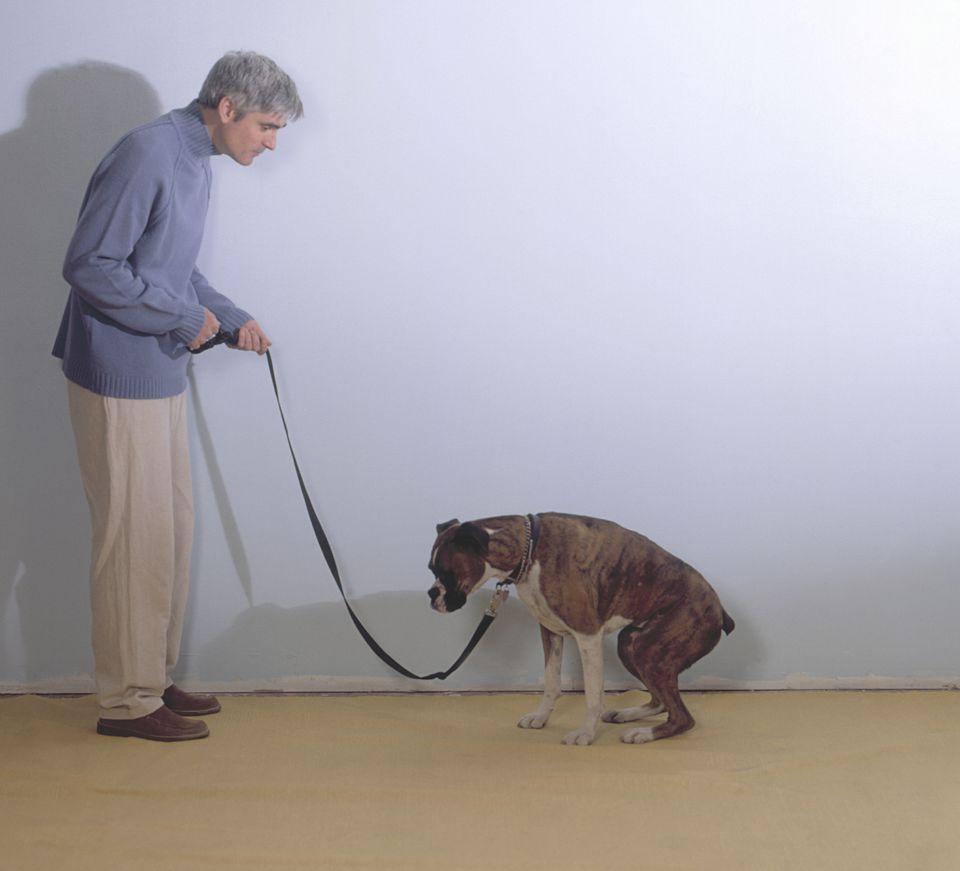 dog-pooping-AnnCutting-getty.jpg