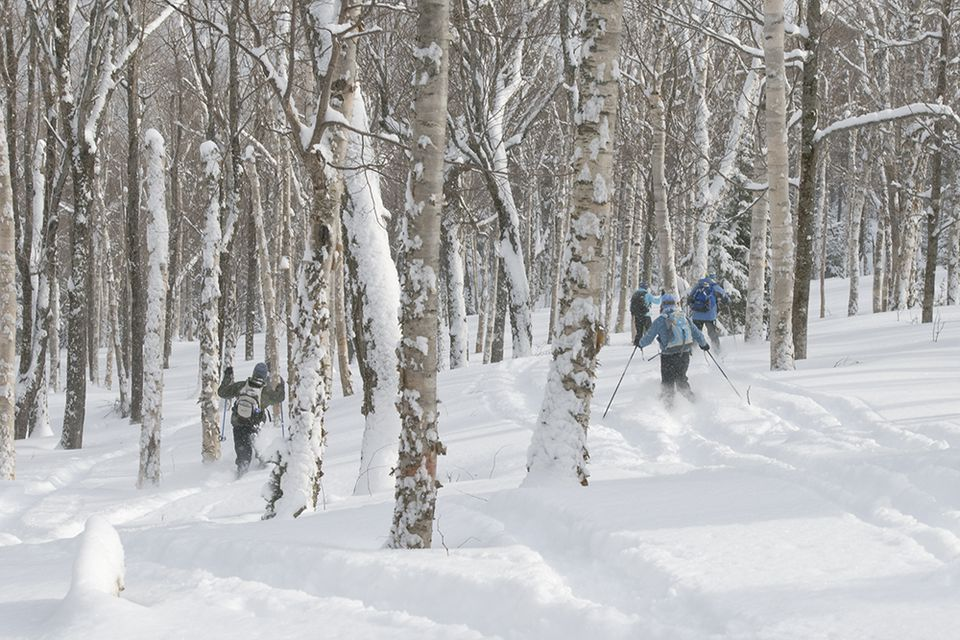 Jackson Ski Touring Foundation