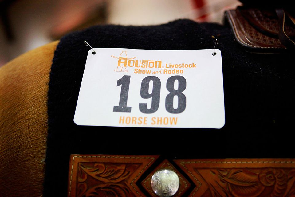 Houston Livestock Show and Rodeo. Horse ready to compete.