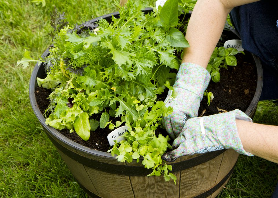 Advantages of Ve able Container Gardening