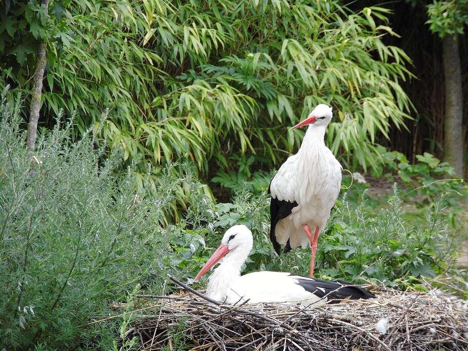 Storks on Nest Against Trees