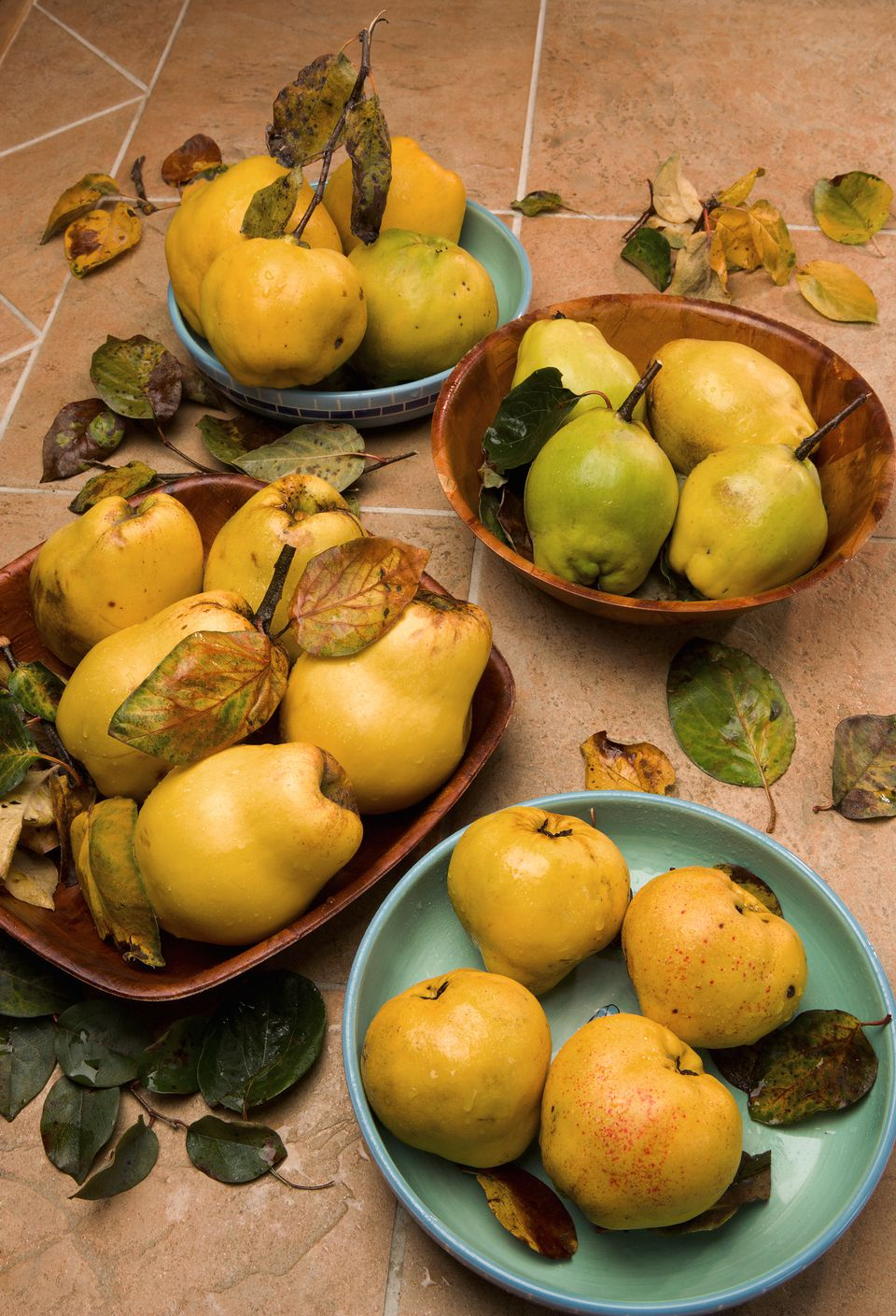 variety of quinces