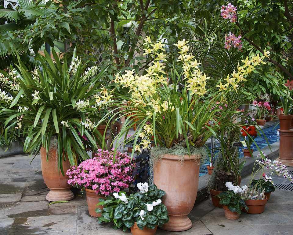 US Botanical Gardens Plant Grouping