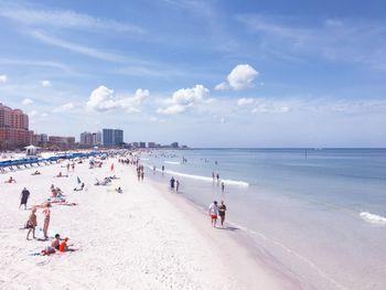 Dog Friendly Beaches Tampa Bay Florida