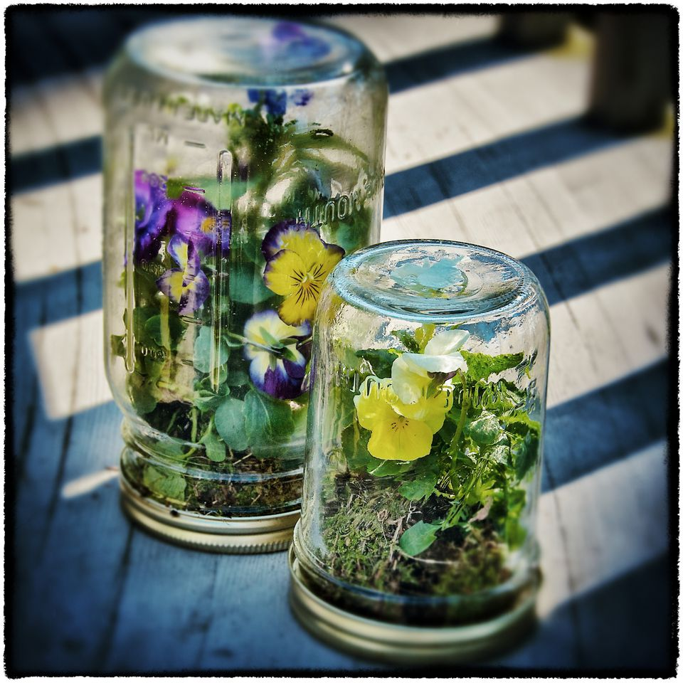 How to DIY a mason jar terrarium