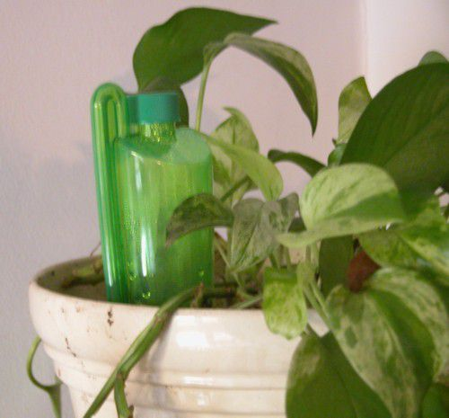 Watering Houseplants Automatically