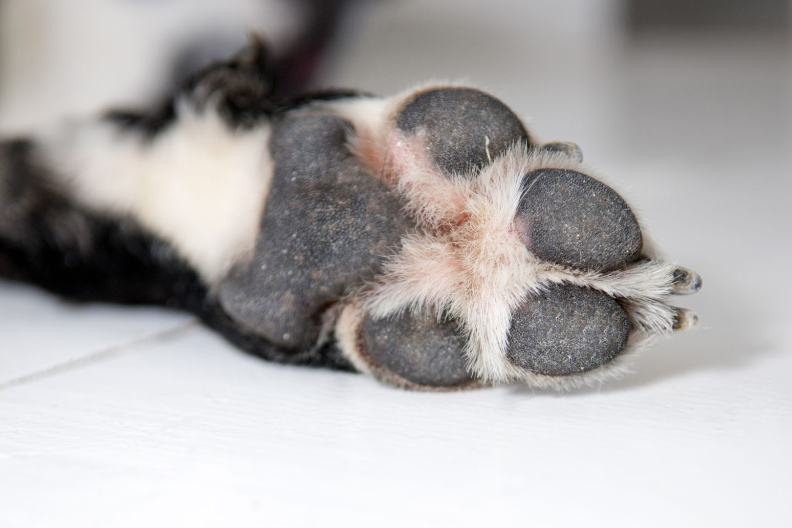 39 frito feet 39 why do dog paws smell like corn chips for Why do i smell like fish