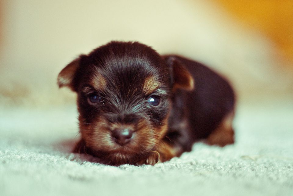 Puppy Development And Dog And Eyes