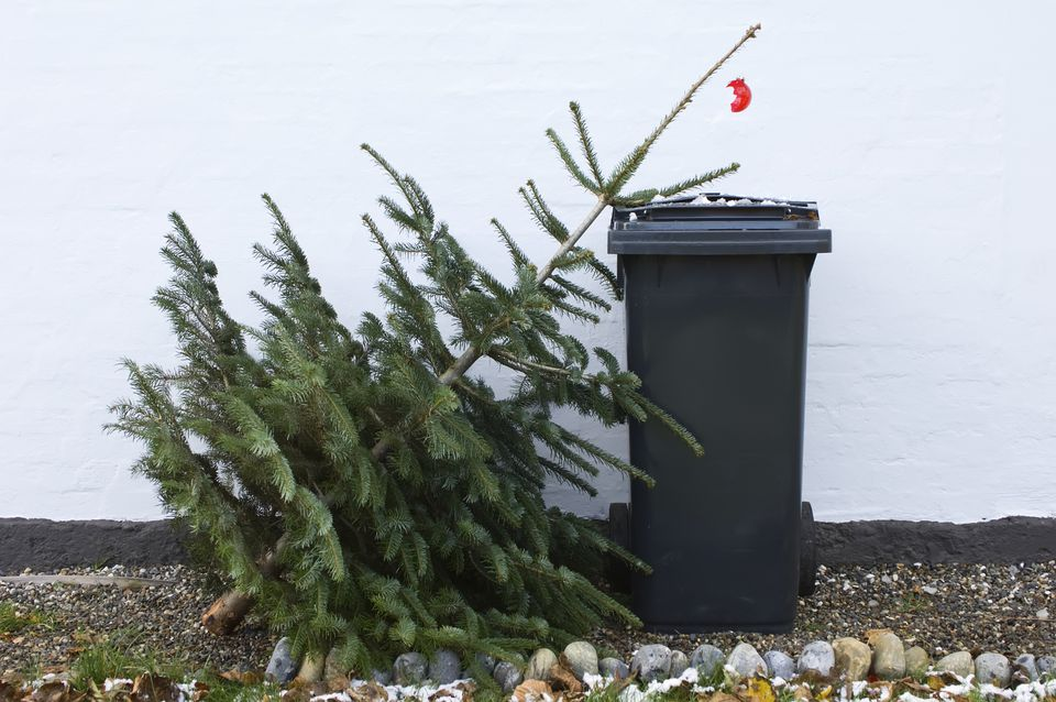 Montreal Christmas tree recycling 2018 dates.