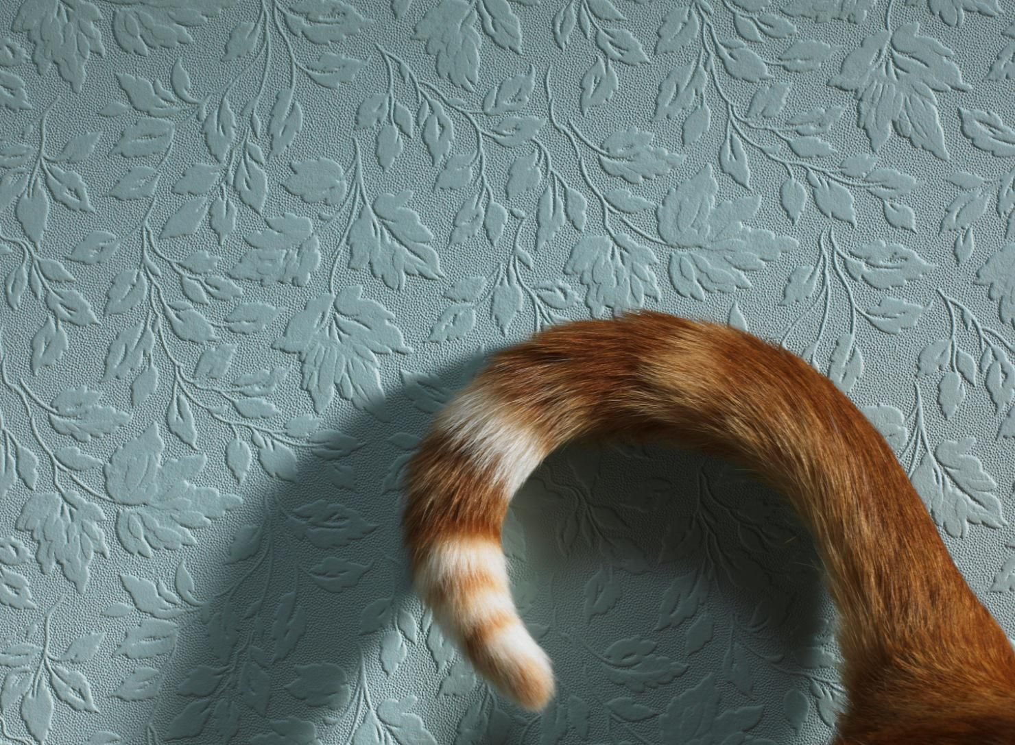 Check Out These Cat Tail Signs