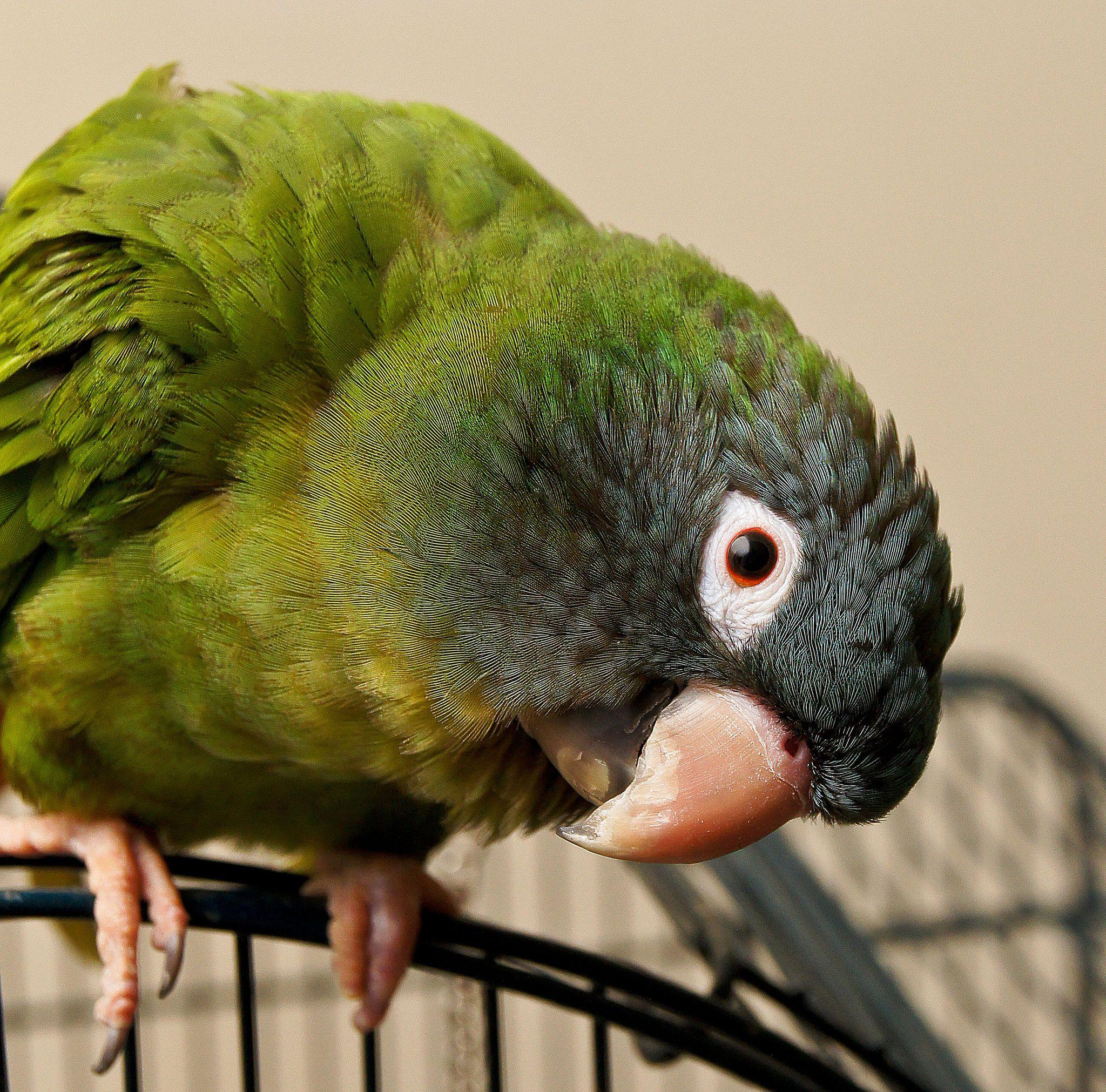 most colorful parrot species