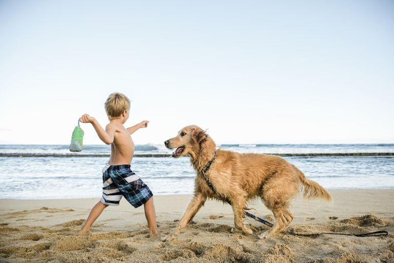 Boy playing with dog on the beach
