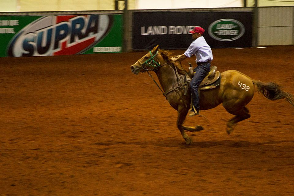 Competitors of the American Horse Quarter breed in the Brazilian national championship.