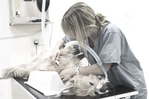Veterinarian with dog on operating table