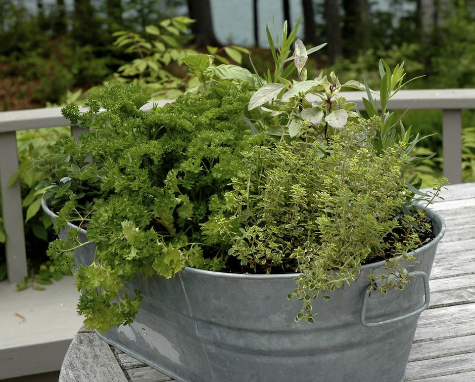 Choosing a Container for Your Herbs Pizza Garden