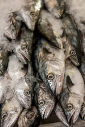Where to Buy Seafood Online