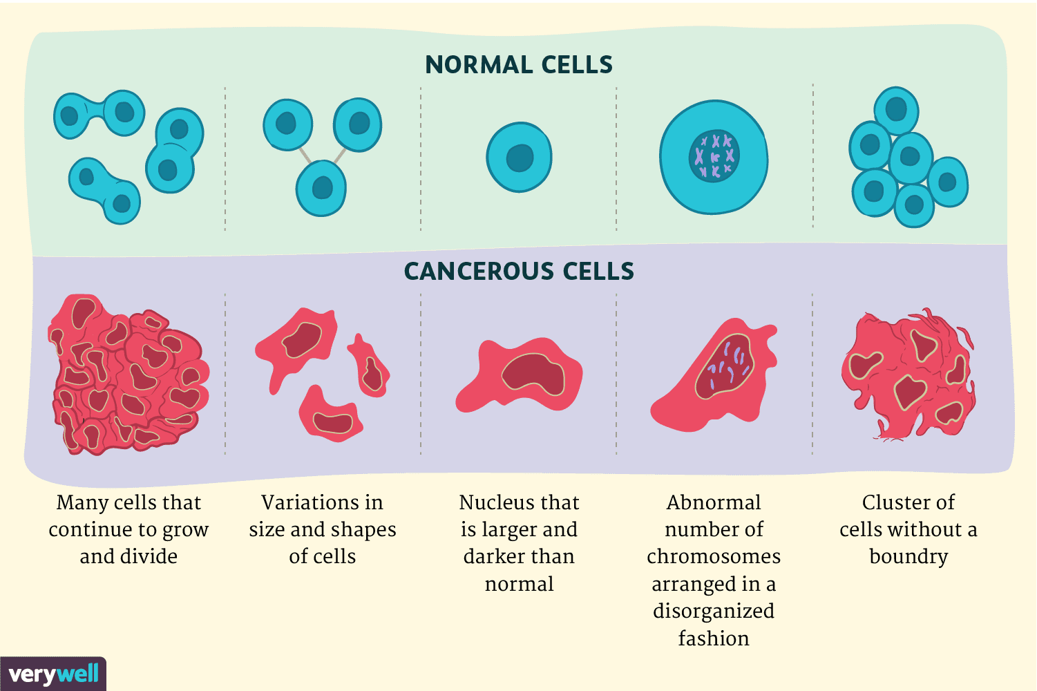 Cancer Cells Vs Normal Cells How Are They Different-7692