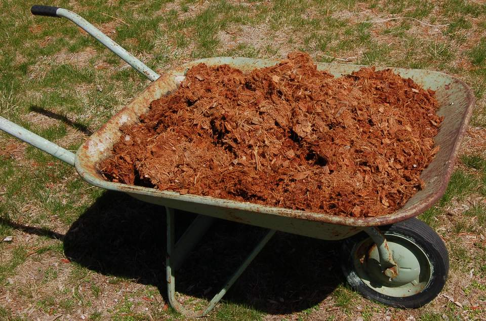 Image: coir mulch in wheelbarrow.