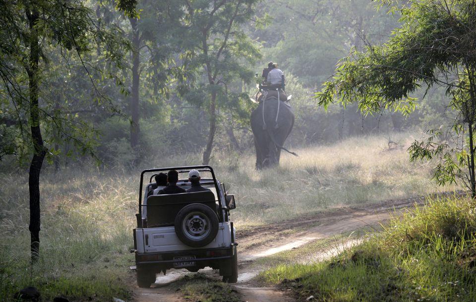 Safari in Bandhavgarh National Park