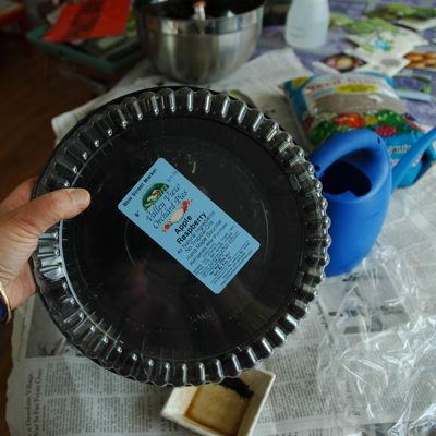 container gardening picture of pie container for free seed starter for container gardens