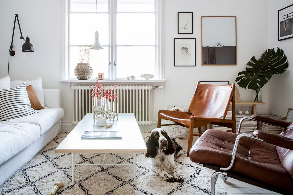 Mismatched furniture and a dog in a small living room