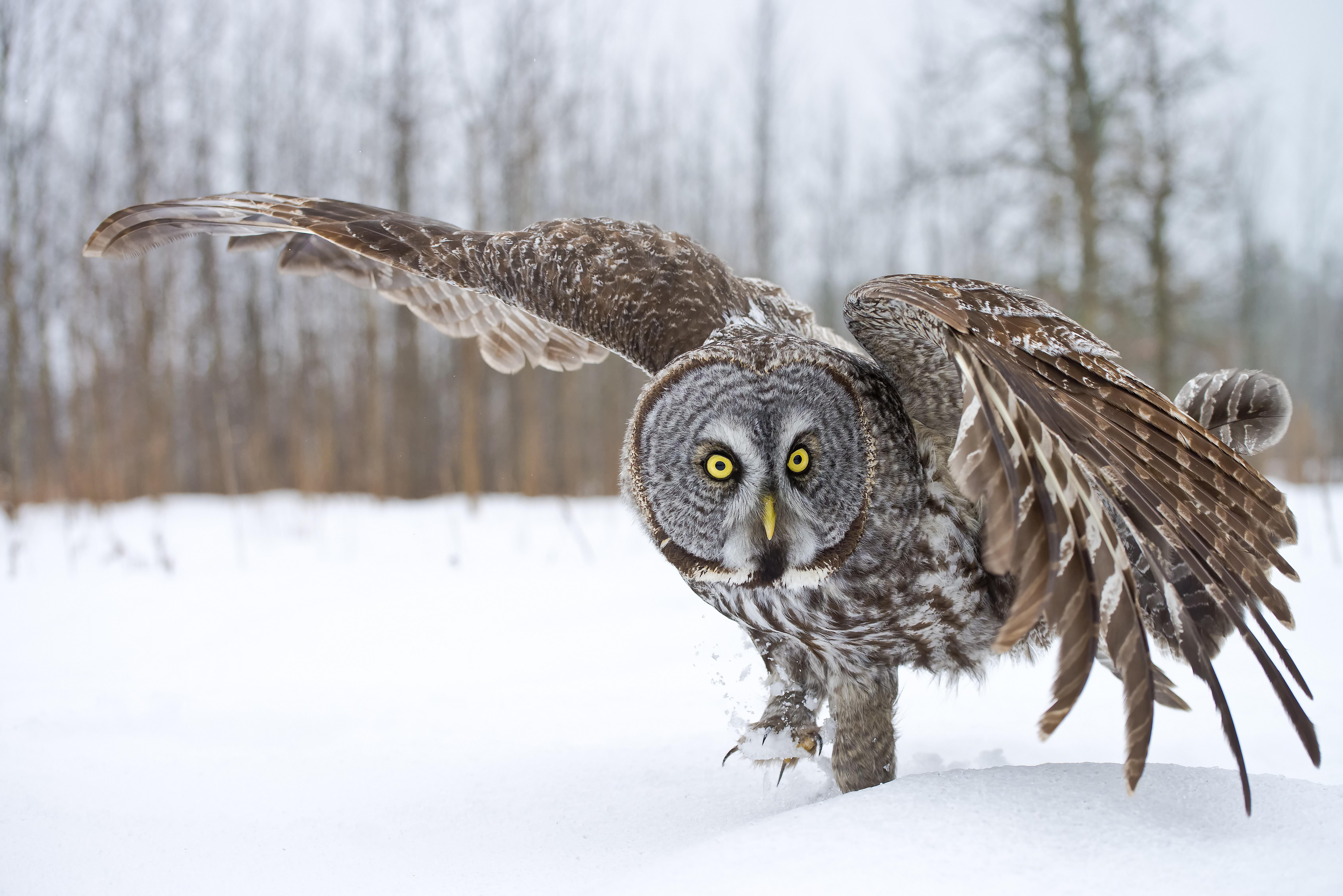 Owl Vocabulary to Understand Their World