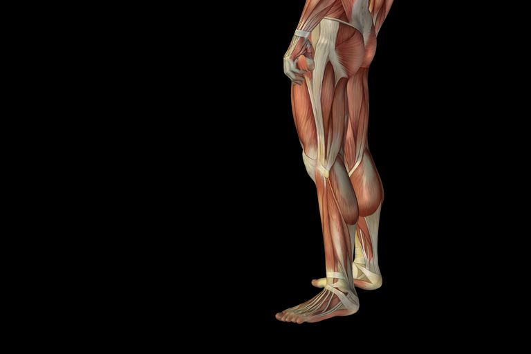 Sciatica refers to pain down one leg.