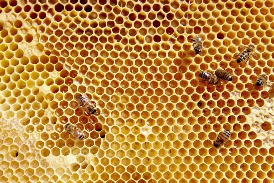 Wooden frame with honeycomb and bees