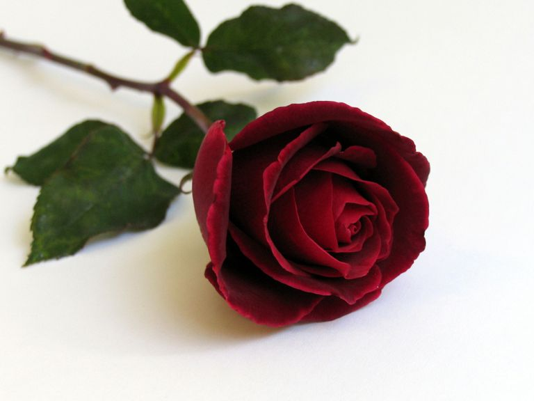 How to draw a rose in colored pencil a red rose is the perfect subject ccuart Images