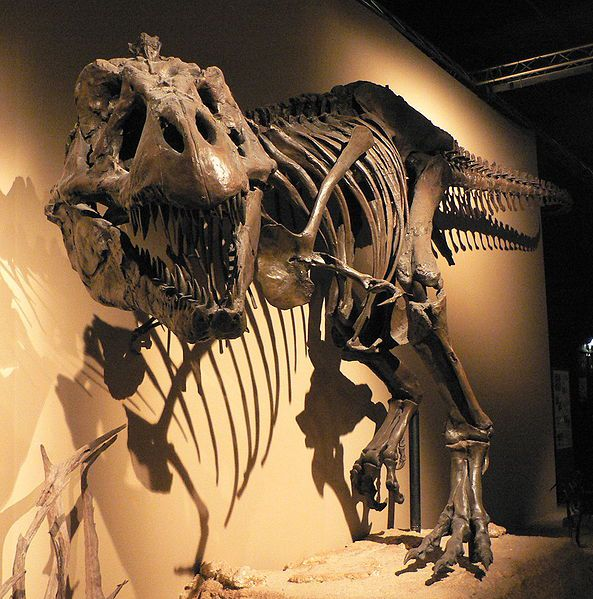 Dinosaurs were the dominant life forms during the Mesozoic Era.