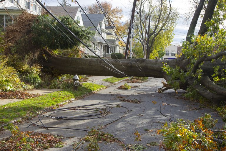 Tree down on power line can cause an emergency power outage.
