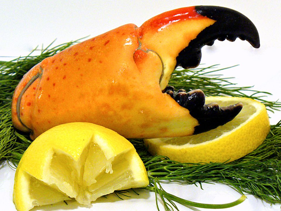 stone, crab, storage, selection, recipes, shellfish, crustacean, seafood, receipts