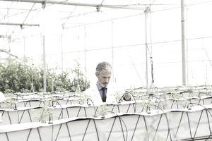 otanist examining plants in greenhouse